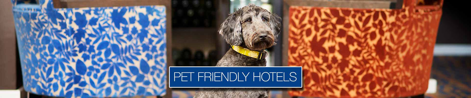 Pet Friendly Hotels In Great Britain Best Western Hotels