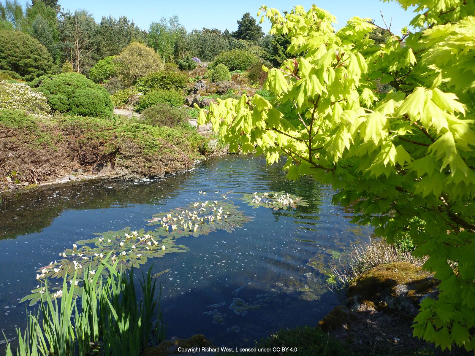 ... Royal Botanic Gardens Edinburgh Pond ...